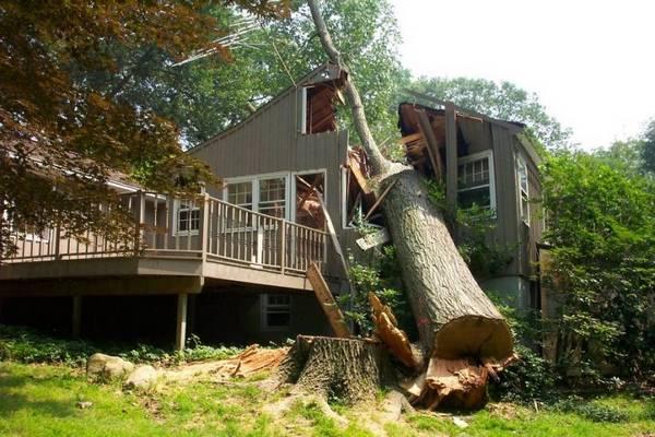 Как правильно спилить дерево по частям